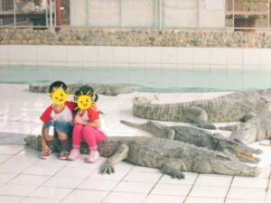 Kiddie Croc 2